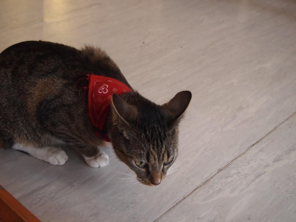 P3159269 1024x768 ネコ好き必見!ドイツにあるネコカフェがひと味違う。