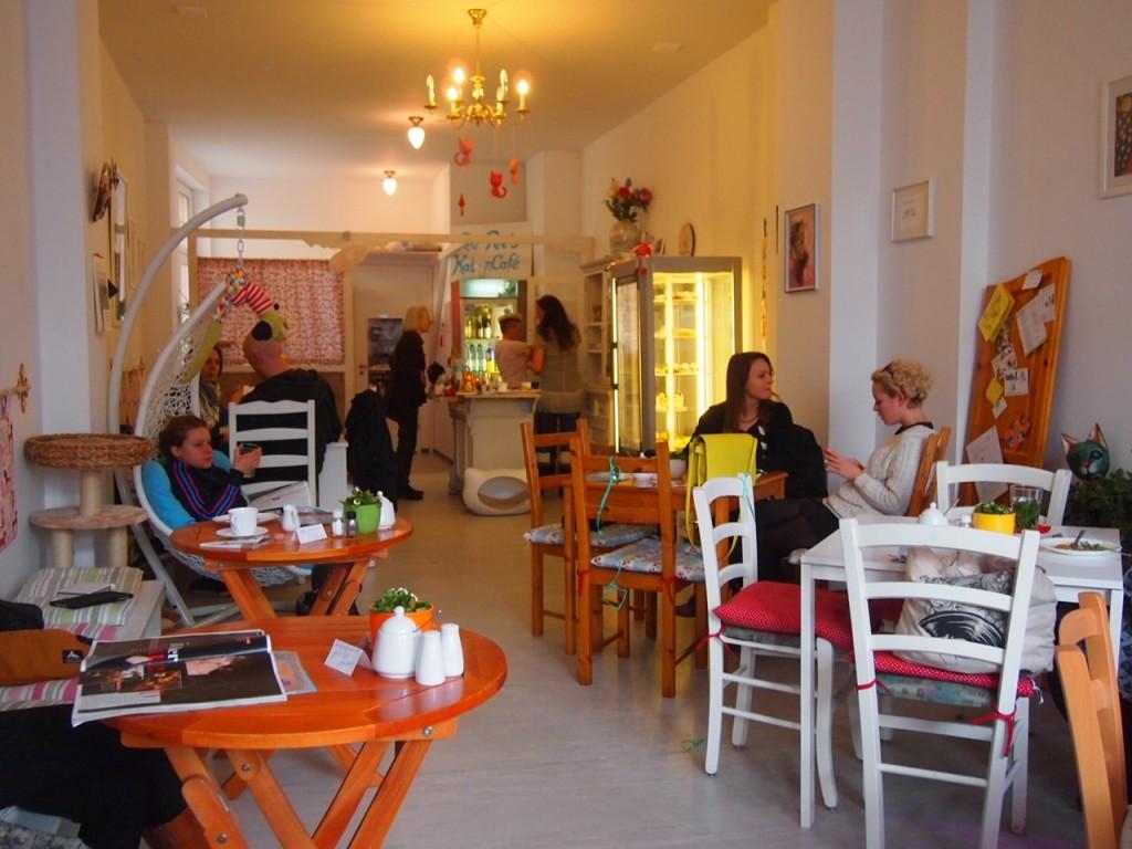 P3159275 1024x768 ネコ好き必見!ドイツにあるネコカフェがひと味違う。