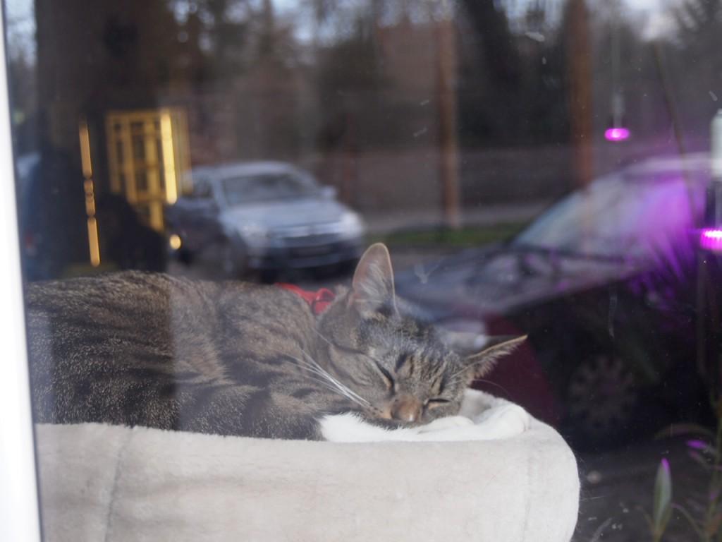 P3159296 1024x768 ネコ好き必見!ドイツにあるネコカフェがひと味違う。