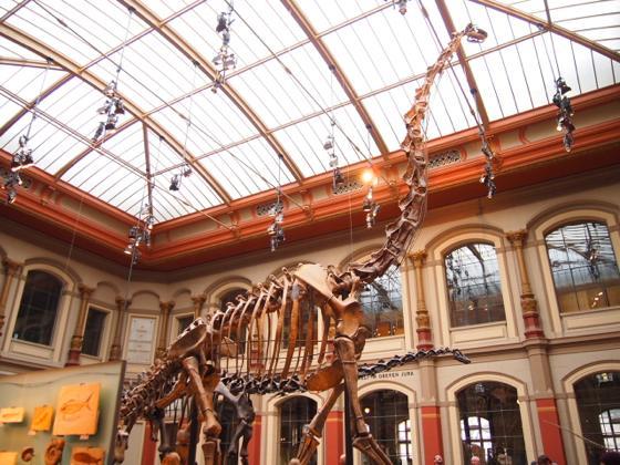 th P2266295 始祖鳥が見れる数少ないベルリン自然史科学博物館がすごい!