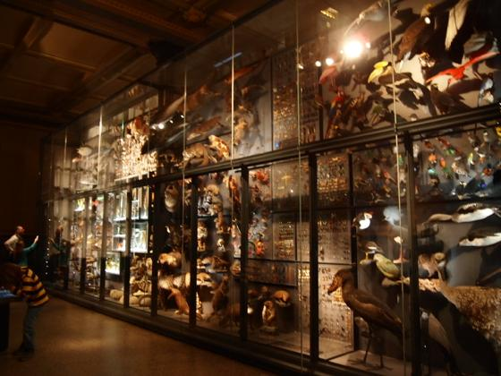 th P2266345 始祖鳥が見れる数少ないベルリン自然史科学博物館がすごい!