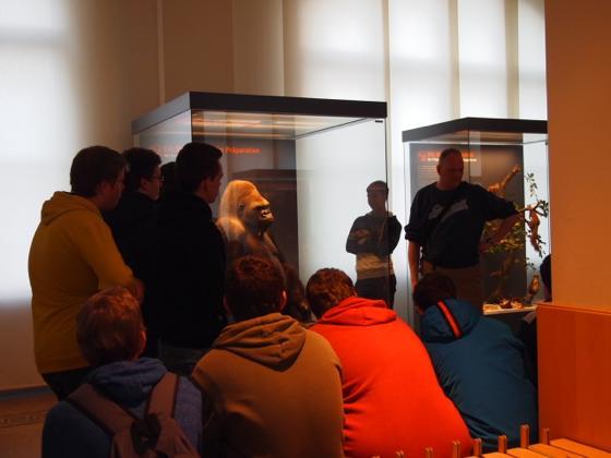 th P2266394 始祖鳥が見れる数少ないベルリン自然史科学博物館がすごい!