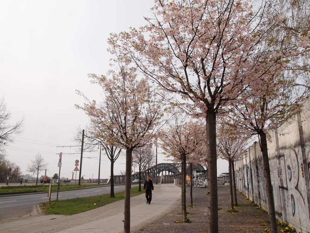 P4010629 1024x768 美しいドイツの桜!意外な場所に咲くベルリンの桜とは?