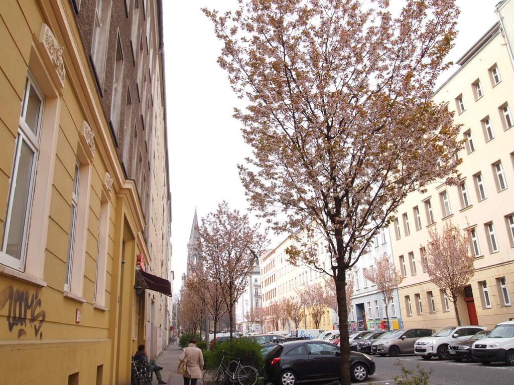 P4010722 1024x768 美しいドイツの桜!意外な場所に咲くベルリンの桜とは?