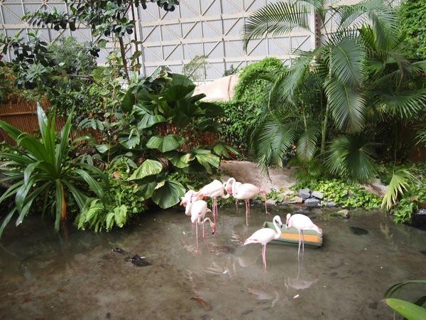 P5173444 ドイツのプール楽園すぎ!混浴温泉のある巨大プール「トロピカルアイランド」に行ってみた!