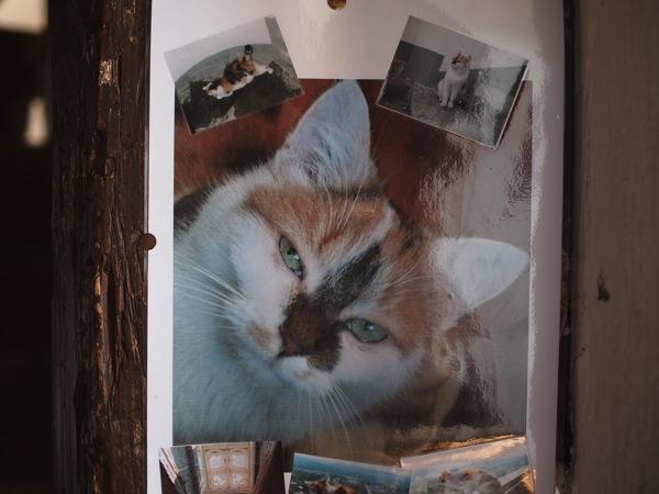 nordlingen cat ネルトリンゲンは進撃の巨人の聖地?3つの特徴を調査した結果…
