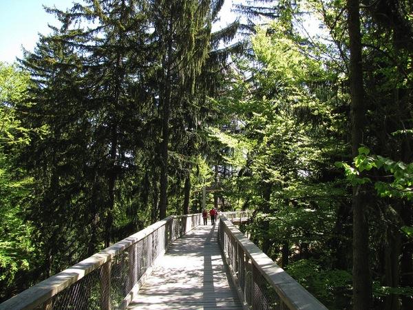 TreeTopWalk2 Frank Hamm カラフルすぎる家に空キャンプ!世にも奇妙なドイツの観光スポット8選